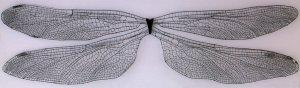 """""""Fly away""""  materiaal: fotopapier op foam, hand getwijnd zilverdraad met Hammerite coating, perspex, etalagespelden,   200 m x 60 cm"""